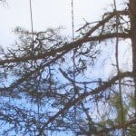 Elisan näkymättömät metsurit