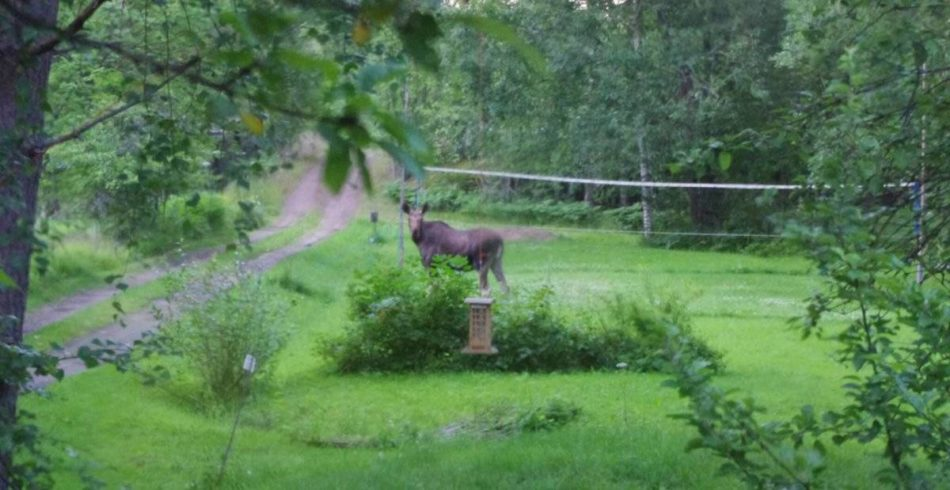 Mäntlahden lentopallo @ Simonlaakson nurmikenttä