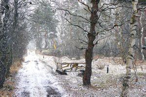 Huhtikuisen lumisateen jälkeen 15.4. Kuvamanipulaatio Ilkka Ahmavaara.
