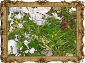 Kukka-asetelma. Tekijä tuntematon, valokuva Ilkka Ahmavaara.