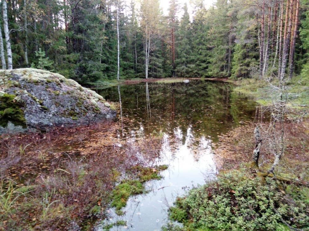 Uusi metsälampi länsirannalta kuvattuna.
