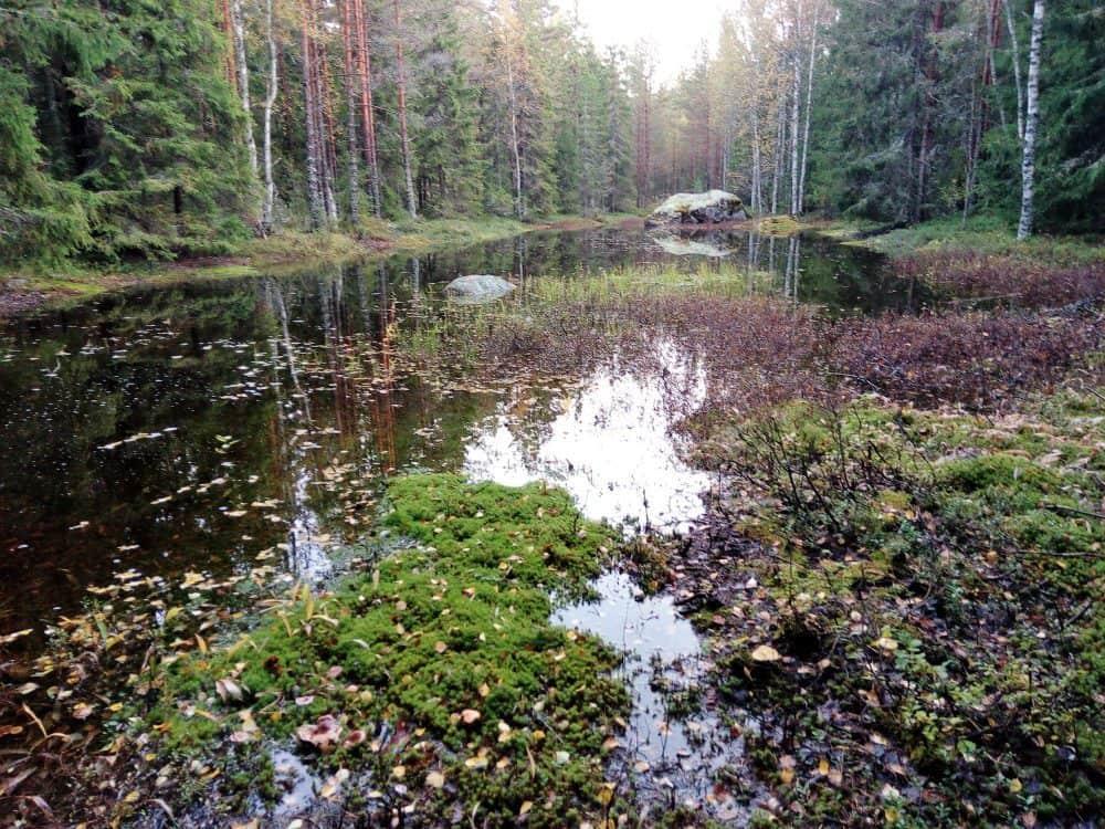 Metsään ilmestynyt lampi itärannalta kuvattuna.